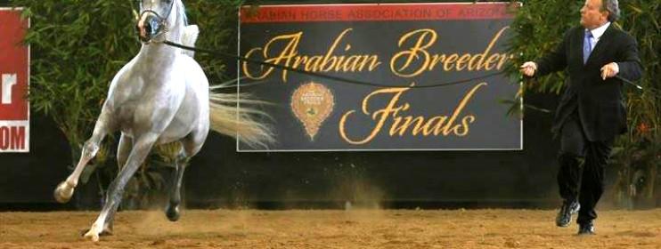 Arabian Breeder Finals