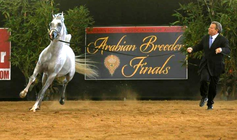 Arabian Breeder Finals